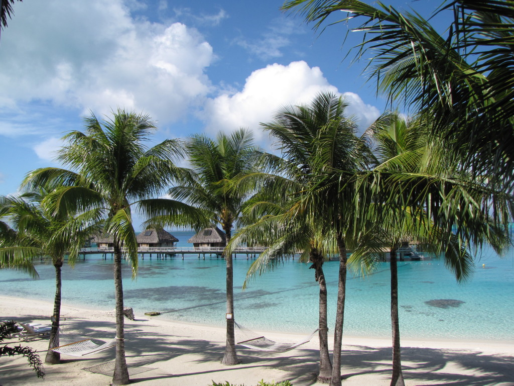 Palm trees and clear blue lagoon