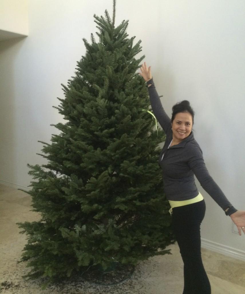 JE's Tree