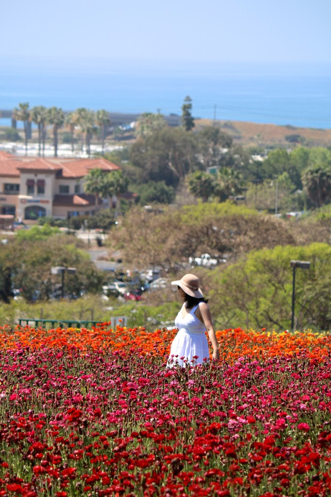 The Flower Fields in Carlsbad, CA
