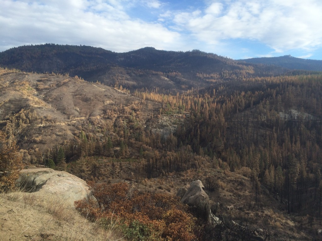 Burnt area in Kings Canyon