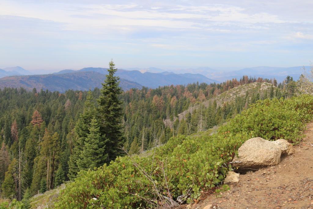 more scenic view